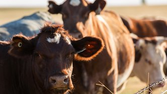 ARC delivers profit and is upbeat on cattle prices