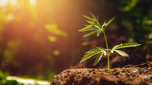 7 ASX pot-stocks leveraged to buzzing Canadian market