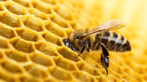 independent expert upgrades melbana s beehive cuba resources