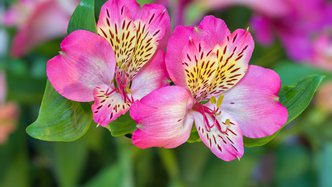 Another successful Roots pilot — first in US$55B floriculture market