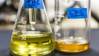Maltese pot deal sets MGC Pharmaceuticals ablaze