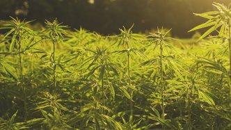 CropLogic to trial farm industrial hemp in Oregon, eyes US$22B market
