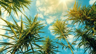 Colombia's largest cannabis producer to acquire Creso Pharma
