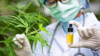 NTI Complete In Vitro Studies on Cannabis Strains, Clinical Trials Await