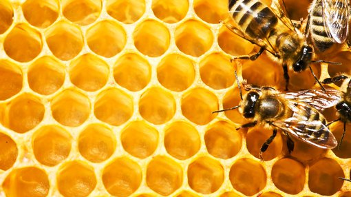 Oil junior Melbana speeds up planning for Beehive-1 drilling