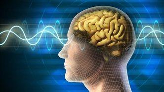 Cellmid MK antibodies effective in brain cancer trials