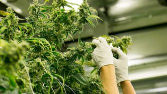 CPH looks to expand its footprint as NY State reaches deal legalise recreational cannabis