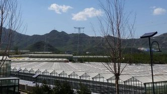 Roots technology to be used in China greenhouse
