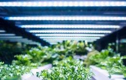 GPP-hydroponics