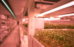 With a view to targeting the hydroponic/commercial glasshouse market in addition to crop cereal/horticultural markets, GPP in conjunction with Monash University, has undertaken hydroponic trials on bok choy and rocket.