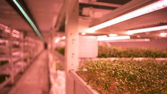 Greenpower Energy sees potential in $600 million hydroponic market