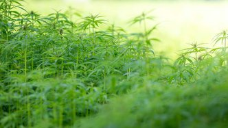 MMJ to Expand Land for Greenhouse Cannabis Production
