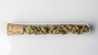 Medical cannabis buds in glass test tube closed with cork on whi