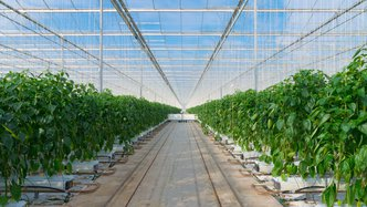 RotoGro inks pivotal ag-tech perishable foods deal