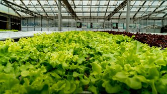 Ag-tech Roots scores first commercial order for South Korea greenhouse