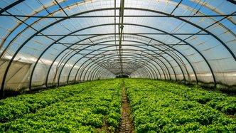 Roots' commercial greenhouse pilot a flourishing success