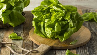 Roots' RZTO cooling tech increases lettuce growth 132%