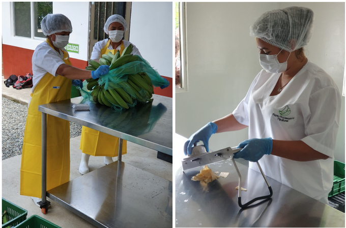Plantains from local farms are cleaned before entering the facility where they are made into chips