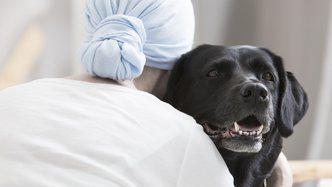 PharmAust set to restart cancer drug trials in pets