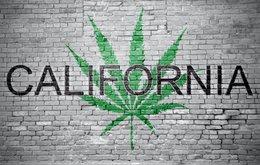 california cannabis.jpeg
