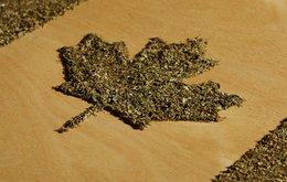 cannabis.jpeg