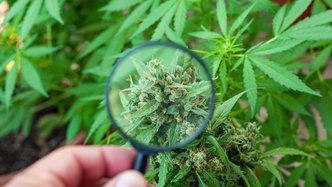 Creso Pharma Secures New US$625,000 Purchase Order for Medicinal Cannabis