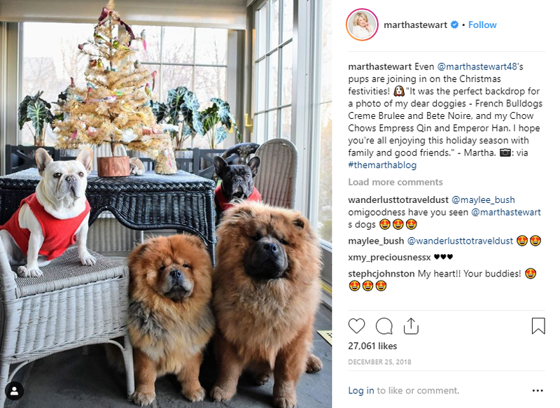 Martha's French Bulldogs Creme Brulee and Bete Noire, and Chow Chows Empress Qin and Emperor Han (Instagram)