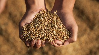 As countries look inward, food security for developing nations becomes more important than ever