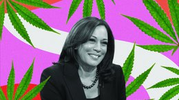 What does a Kamala Harris Vice Presidency mean for cannabis legalisation?