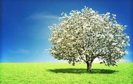 money on tree.jpg