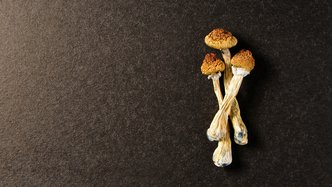 $15M grant for psychedelics studies as calls to combat mental health intensify