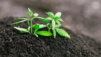 CropLogic moves a step closer to monetising hemp crop