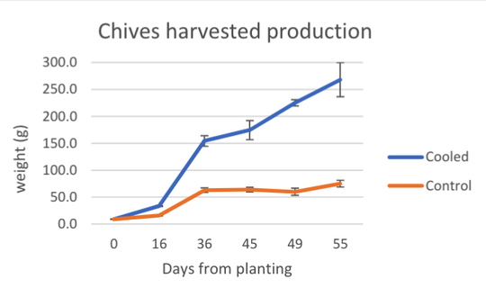 Cooled chives plants (shown in blue) continued growing for 55 days while uncooled plants (orange) virtually stopped growing after 36 days