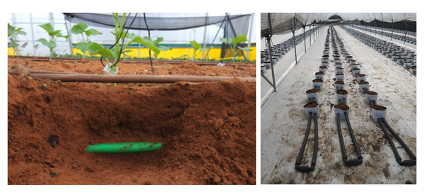 Roots' RTZO technology in field trials.