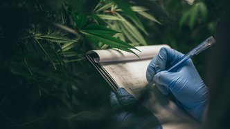 The world in medical cannabis and weed this week